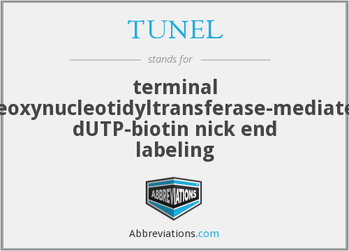 What does TUNEL stand for?