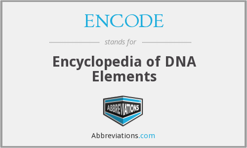 What does ENCODE stand for?