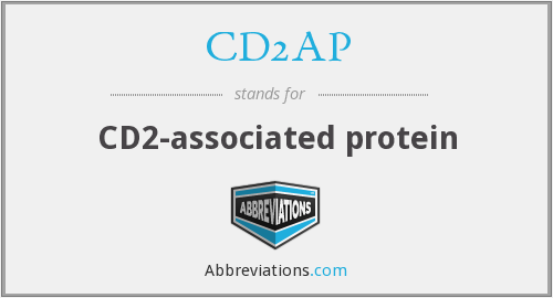 What does CD2AP stand for?