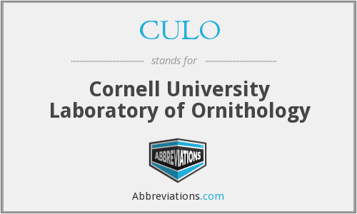 What does CULO stand for?