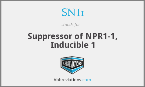 What does SNI1 stand for?