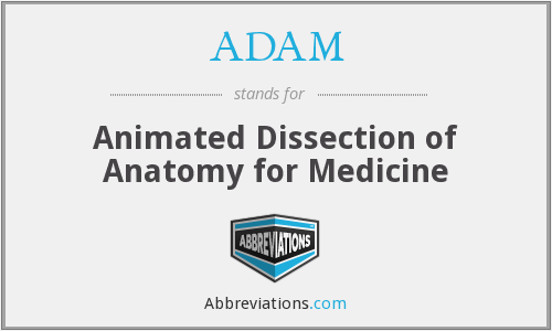 ADAM - Animated Dissection of Anatomy for Medicine