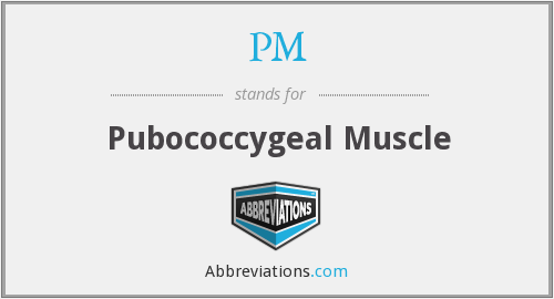 PM - Pubococcygeal Muscle