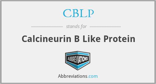 CBLP - Calcineurin B Like Protein