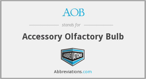 AOB - Accessory Olfactory Bulb