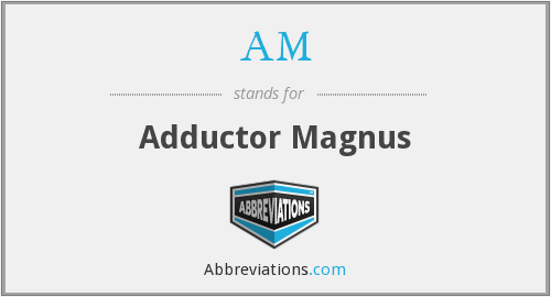 AM - adductor magnus