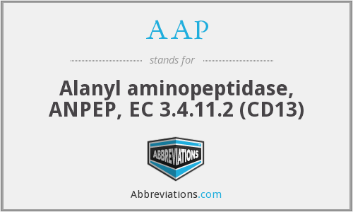 AAP - Alanyl aminopeptidase, ANPEP, EC 3.4.11.2 (CD13)