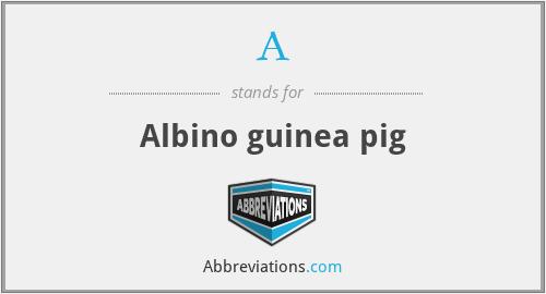 A - Albino guinea pig