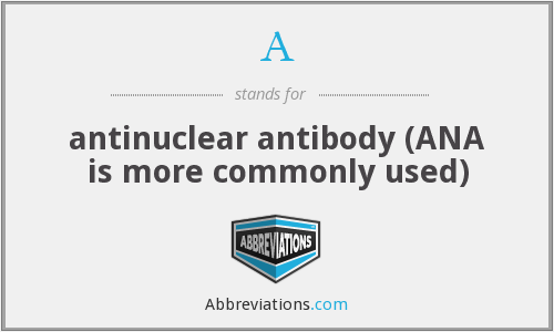 A - antinuclear antibody (ANA is more commonly used)