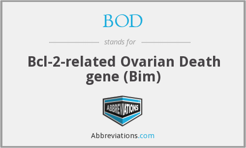 BOD - Bcl-2-related Ovarian Death gene (Bim)