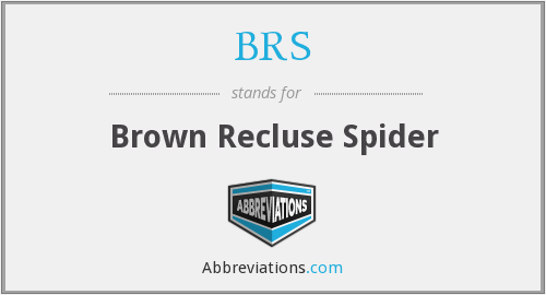 BRS - brown recluse spider