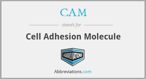 CAM - cell adhesion molecule