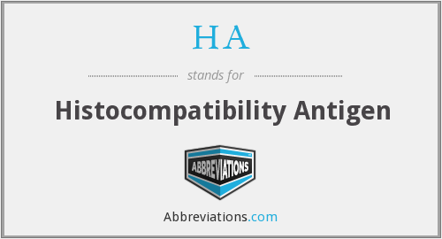 HA - histocompatibility antigen
