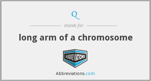 q - long arm of a chromosome
