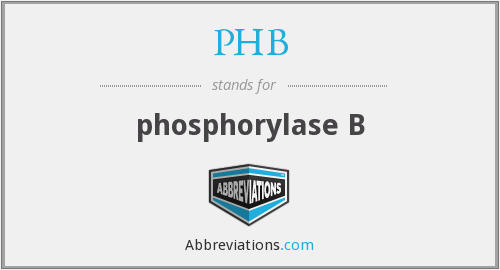 PHB - phosphorylase B