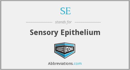 SE - sensory epithelium