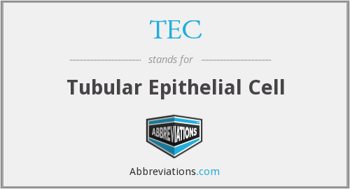 TEC - Tubular Epithelial Cell