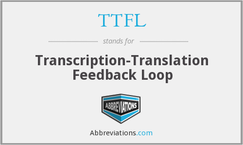 TTFL - transcription-translation feedback loop