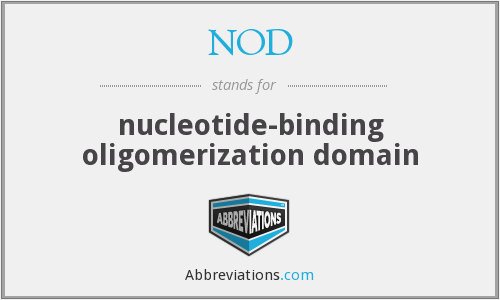 NOD - nucleotide-binding oligomerization domain