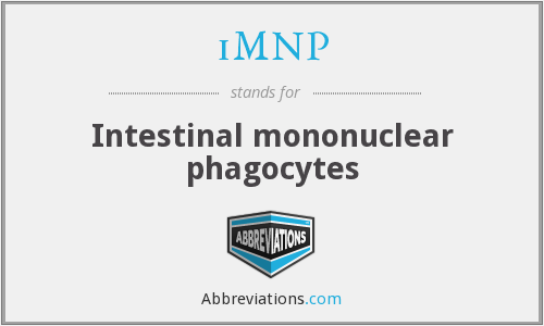 iMNP - Intestinal mononuclear phagocytes
