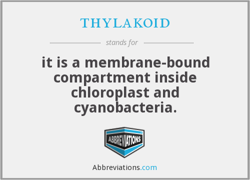 thylakoid - it is a membrane-bound compartment inside chloroplast and cyanobacteria.