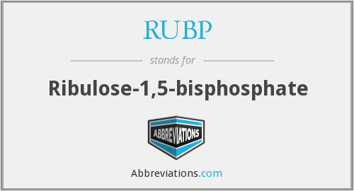 What does RUBP stand for?