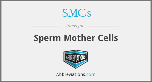 SMCs - Sperm Mother Cells