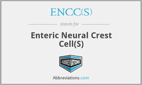 ENCC(s) - enteric neural crest cell(s)