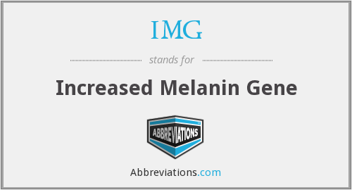 IMG - Increased Melanin Gene