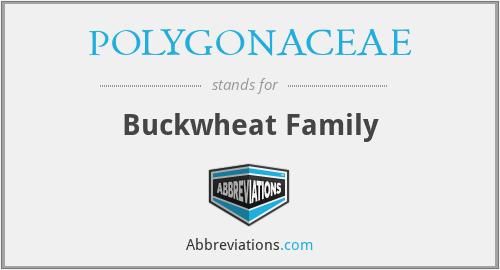 POLYGONACEAE - Buckwheat Family