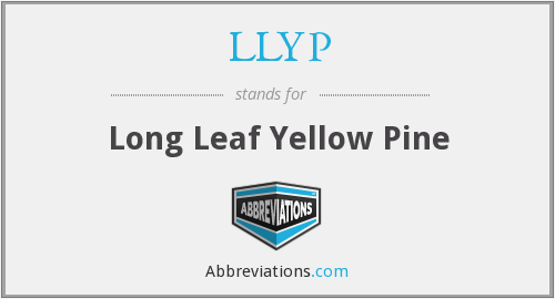 What does LLYP stand for?