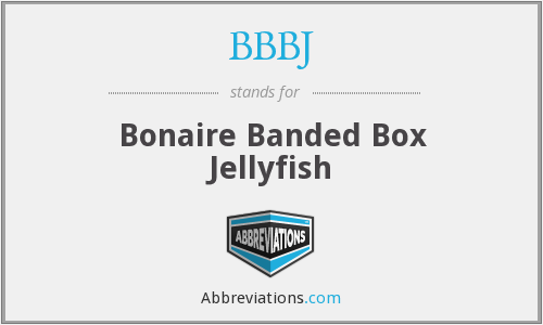 BBBJ - Bonaire Banded Box Jellyfish