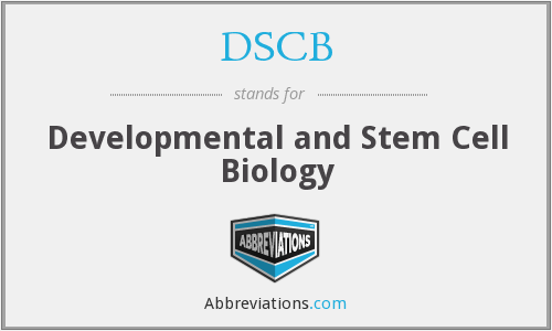 What does DSCB stand for?