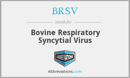What does BRSV stand for?
