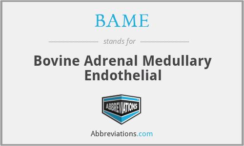 BAME - Bovine Adrenal Medullary Endothelial