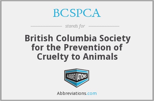 What does BCSPCA stand for?