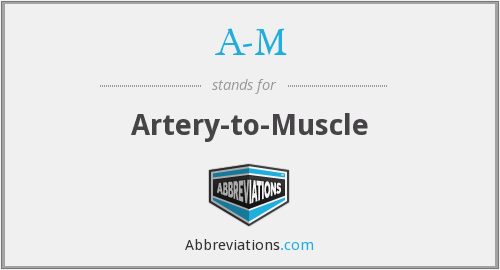 A-M - Artery-to-Muscle