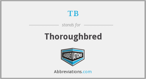 What does thoroughbred stand for?