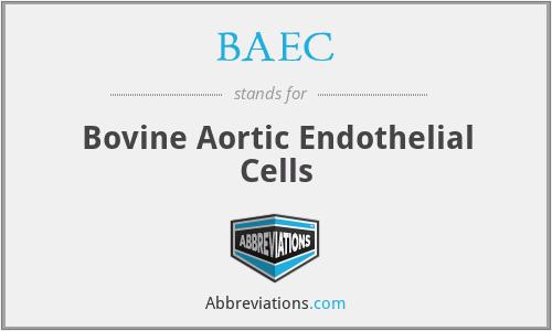 BAEC - Bovine Aortic Endothelial Cells