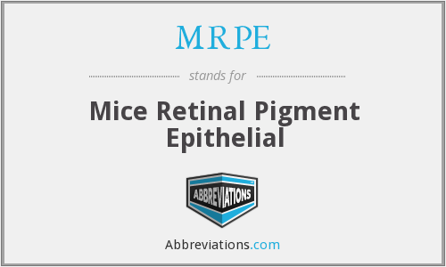 MRPE - Mice Retinal Pigment Epithelial