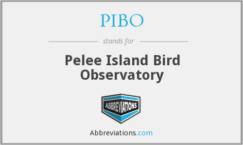 What does PIBO stand for?