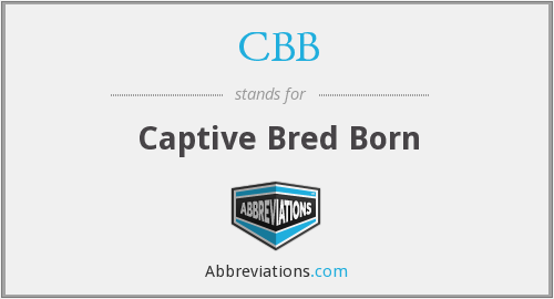 CBB - Captive Bred Born
