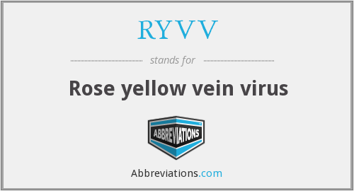 What does RYVV stand for?