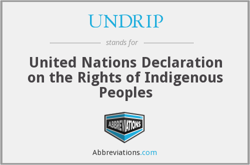What does UNDRIP stand for?