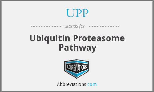 UPP - Ubiquitin Proteasome Pathway
