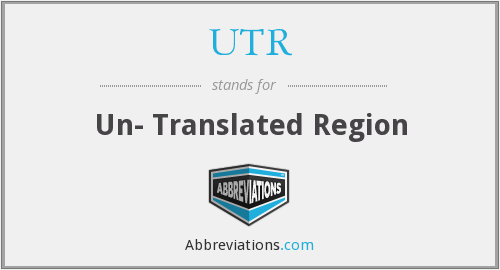 UTR - Un- Translated Region