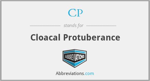CP - Cloacal Protuberance