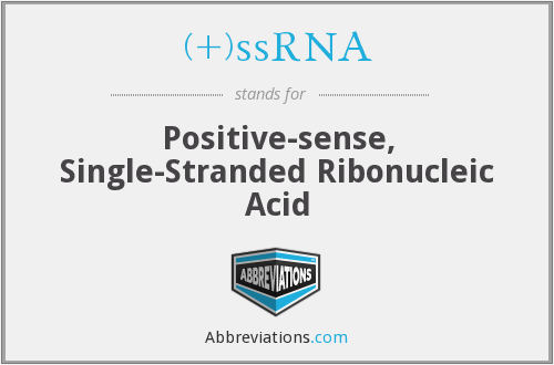 (+)ssRNA - Positive-sense, Single-Stranded Ribonucleic Acid