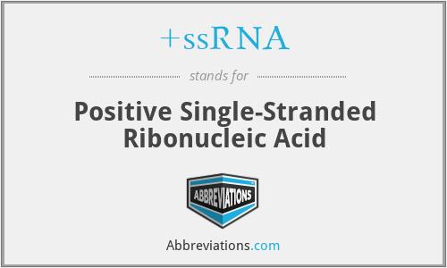 +ssRNA - Positive Single-Stranded Ribonucleic Acid