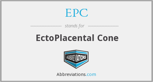EPC - EctoPlacental Cone